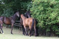 Ransdaal-e.o.-037-Drie-paarden