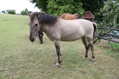 Ransdaal-e.o.-039-Drie-paarden