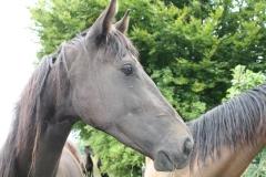 Ransdaal-e.o.-042-Paarden