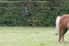 Reijmerstok-035-Pony