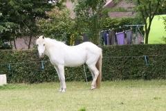 Reijmerstok-036-Witje-paard
