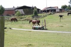 Rondom-Ubachsberg-039-Paarden