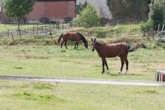 Rondom-Ubachsberg-040-Paarden