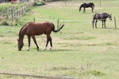 Rondom-Ubachsberg-041-Paarden
