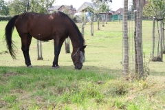 Rondom-Ubachsberg-051-Paard