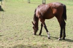 Rondom-Ubachsberg-053-Paard
