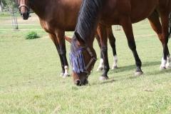 Rondom-Ubachsberg-054-Paarden