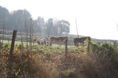 Schoonbron-Engwegen-002-Paarden-in-de-herfst