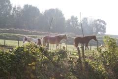 Schoonbron-Engwegen-005-Paarden-in-de-herfst