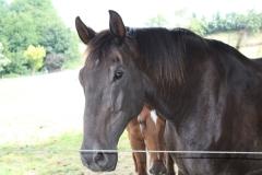 Spaubeek-027-Paard