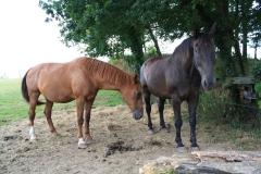Spaubeek-029-Paarden