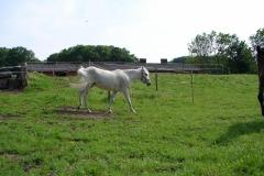 Thull-085-Paarden
