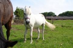 Thull-087-Paarden