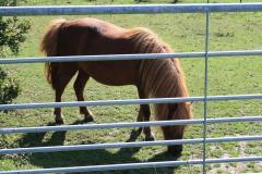 Trintelen-Eys-026-Pony-achter-hek