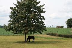 Trintelen-Eys-292-Paard-onder-boom