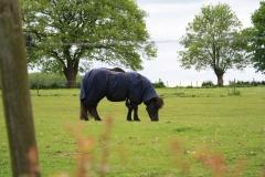 Voerendaal-113-Pony-met-dekje