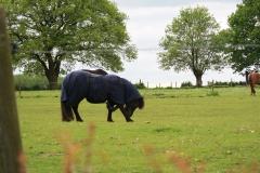 Voerendaal-114-Pony-met-dekje