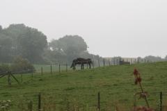 Wahlwiller-Paarden-1