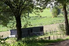 Houthem-en-omgeving-053-Stal-in-weiland