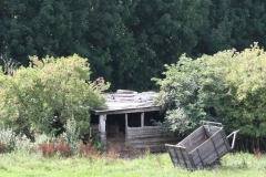 Klimmen-Termaar-046-Sjop-in-weiland