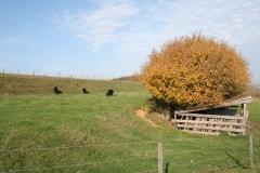 Schoonbron-Engwegen-015-Vergezicht-in-de-herfst