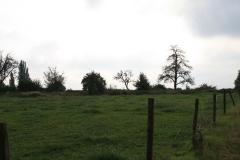 Eyserheide-Vergezicht-met-weiland-en-bomen