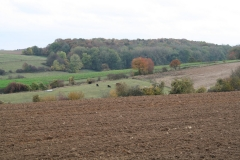 Gerendal-e.o.-025-Herfstlandschap-met-koeien
