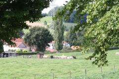 Klimmen-Walem-045-Doorkijk-op-weiland