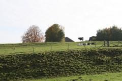Schoonbron-Engwegen-010-Weiland-in-de-herfst