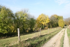 Schoonbron-Engwegen-029-Herfst