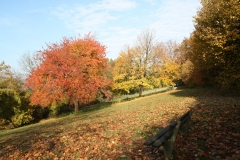 Schoonbron-Engwegen-031-Herfst